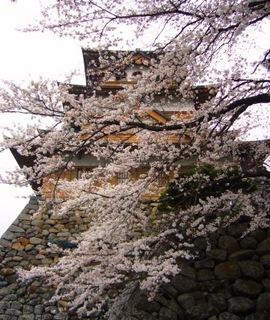 17春の季語・植物・桜(城を背に).jpg