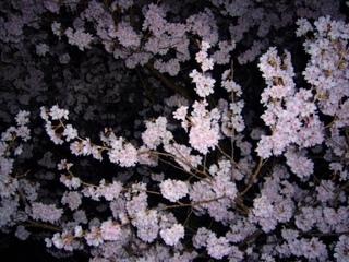 17春の季語・植物・桜(夜桜).jpg