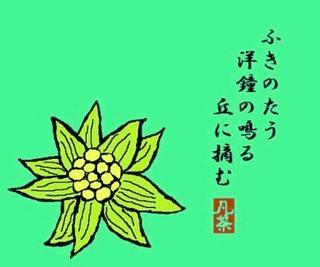 17春の季語・植物・蕗の薹(ふきのとう)【イラスト】.jpg