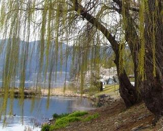 17春の季語・植物・木の芽�A.jpg