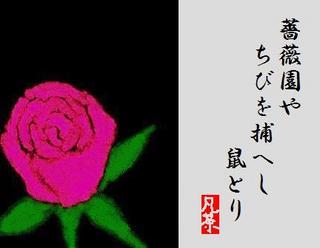 27夏の季語・植物・薔薇 〜ばら〜.jpg