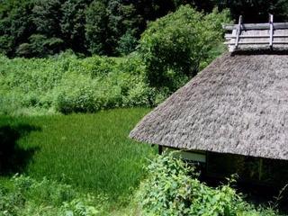27夏の季語・植物・万緑.jpg