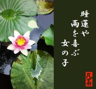 27夏の季語・植物・睡蓮(すいれん)・俳句添え.jpg