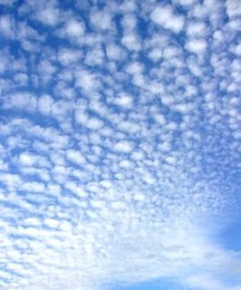 32秋の季語・天文-鰯雲.jpg