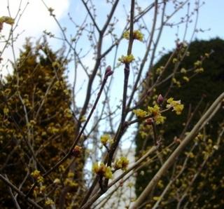 17春の季語・植物・木の芽�C.jpg