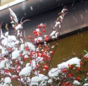42冬の季語・天文・雪(写真�@).jpg