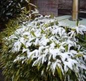 42冬の季語・天文・雪(写真�C).jpg